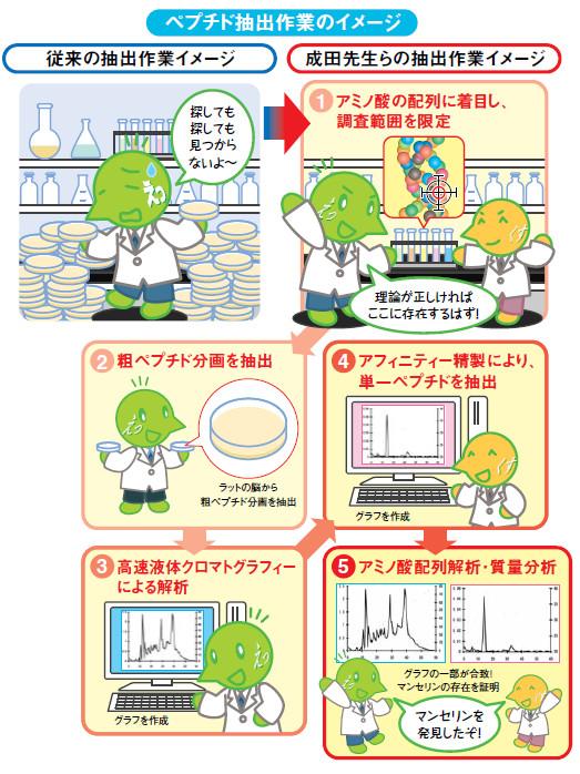 説明図:ペプチド抽出作業のイメージ