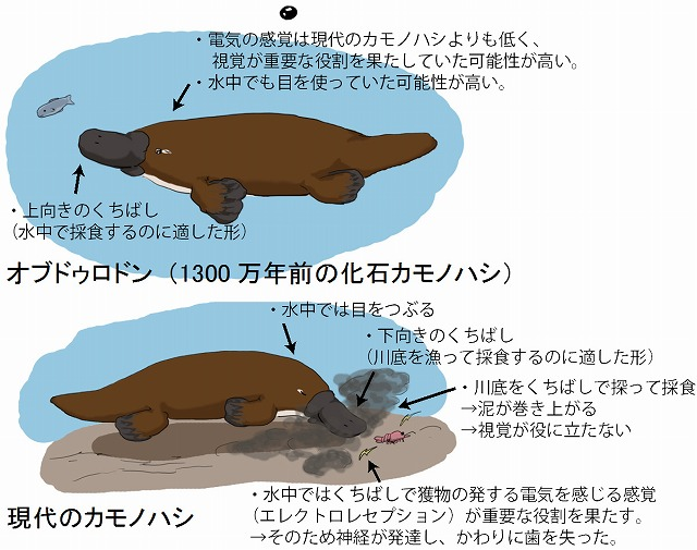 20161013_kamonohashi-1